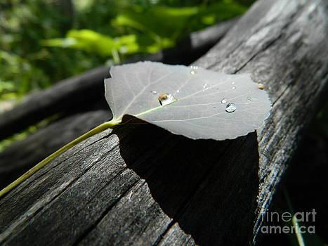 Dark Leaf with Dew by Sara  Mayer