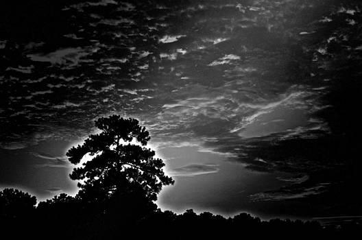 Walter  Holland - Dark Mighty Pine