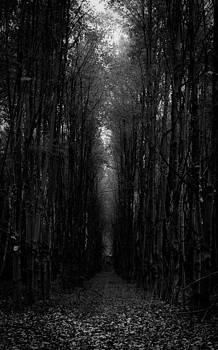 Dark Path by Theodore Lewis