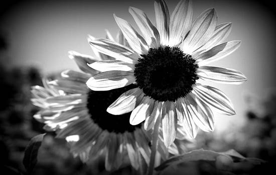 Laurie Perry - Dark Petals