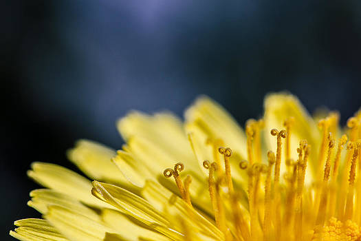 Dark Pollenation by Jon Gray