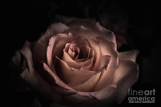 Dark Rose by Jared Hinkle