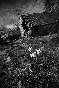 Liz  Alderdice - Dark Spring