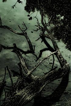 Joe Bledsoe - Dark Tree