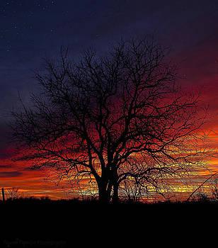 Darkness Falls by Garett Gabriel