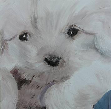 Darryl D. Dog by Paula Peltier