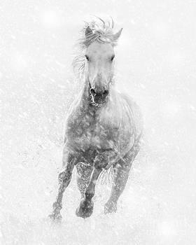 Dashing through the Snow by Heather Swan