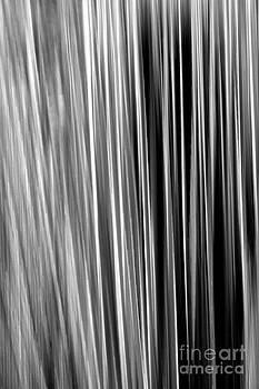 Douglas Taylor - DASYLIRION VELOCITY - SHADES OF GREY