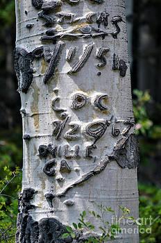 Dated Tree by Juls Adams