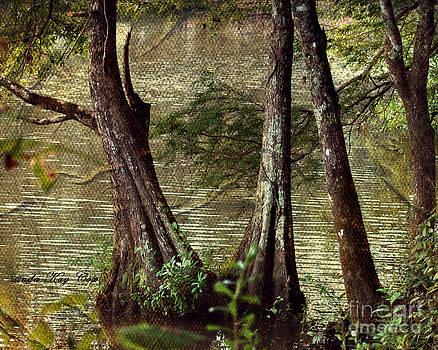 Davids River by Linda Cox