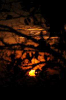 Dawn by Money Sharma