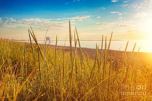Jo Ann Snover - Dawn sun hits dune grasses on Maine beach