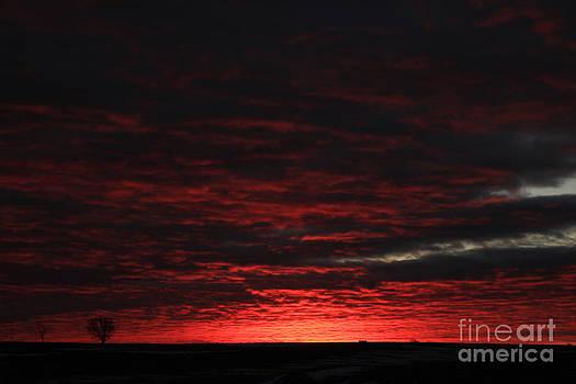 Dawn by Thomas Danilovich
