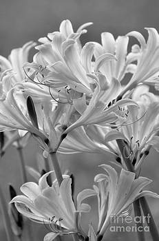 Day Lilies by Maureen Cavanaugh Berry