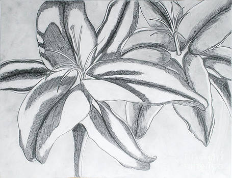 Day Lily by Cecilia Stevens