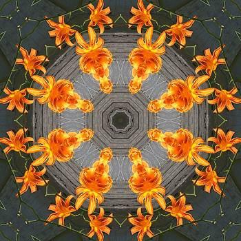 Valerie Kirkwood - Day Lily Kaleidoscope