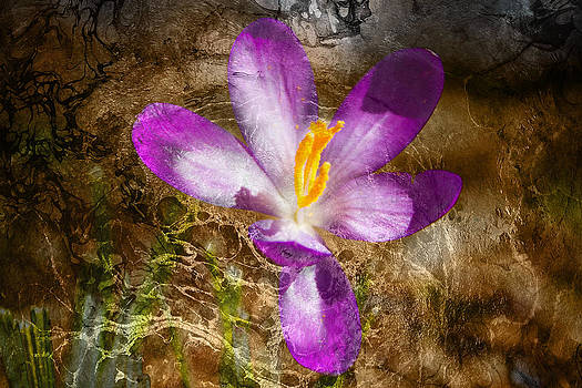 Day Of The Crocus by Kathy Nairn