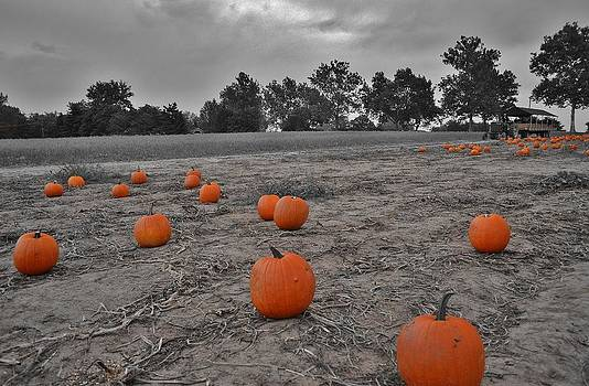 Day of the Pumpkins by Thomas  MacPherson Jr