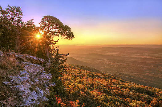 Jason Politte - Daybreak on Mt. Magazine - Arkansas - Cedar Tree - Autumn
