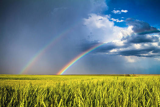 Daydream - Double Rainbow and Wheat Field in Kansas by Sean Ramsey