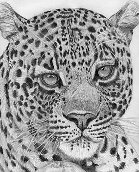 Daydreaming Leopard by Chelsea Blair