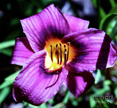 Daylily I by Patricia Griffin Brett