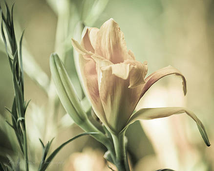 Daylily in Antique by Kathy Nairn