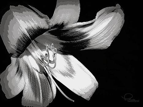 Ludwig Keck - Daylily in Gray