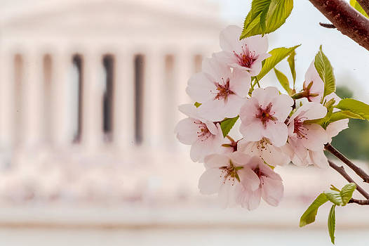 David Hahn - DC Blossoms in Bloom