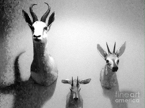 Dead animals..not trophies by WaLdEmAr BoRrErO