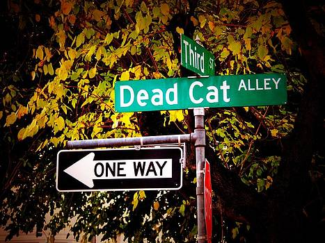 Dead Cat Alley by Bobby Miranda