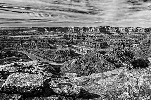 Wes and Dotty Weber - Dead Horse Point Tree In Black and White
