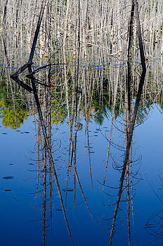 Dead reflections. by Rob Huntley