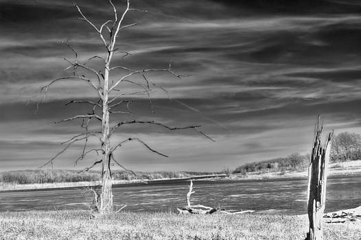 Dead Sycamore BW by Larry Bodinson