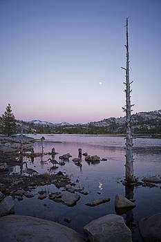 Dead Tree at Buck Island by Joel Moranton