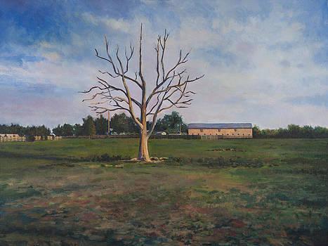 Dead Tree at Spring Hills Farm by David P Zippi