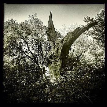 Dead Tree by Deirdre Ryan