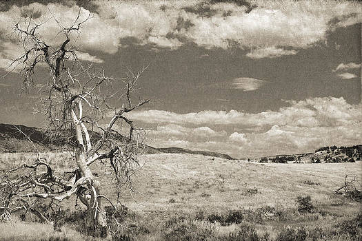 Dead tree in an open field with a cloudy sky and mountains in th by Kim M Smith