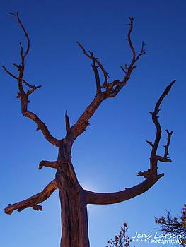Dead Tree by Jens Larsen