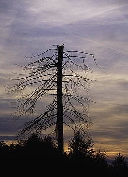 Dead tree by Patrick Kessler