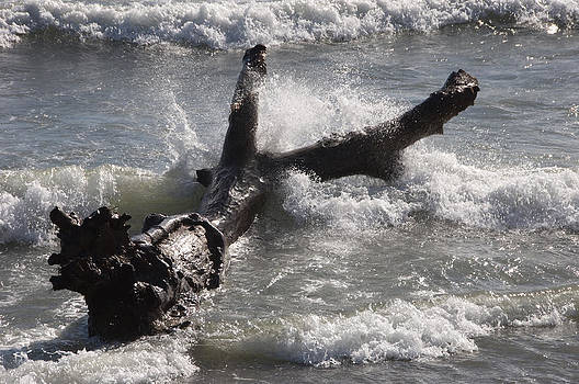 Dead Tree Washed Up On Beach by Austin Brown