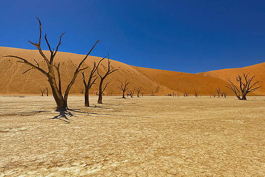 Paul W Sharpe Aka Wizard of Wonders - Dead Trees in Naukluft Park Namib Desert