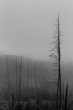 Dead Trees Mount Washburn WY by Troy Montemayor