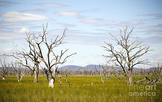 Tim Hester - Dead Trees