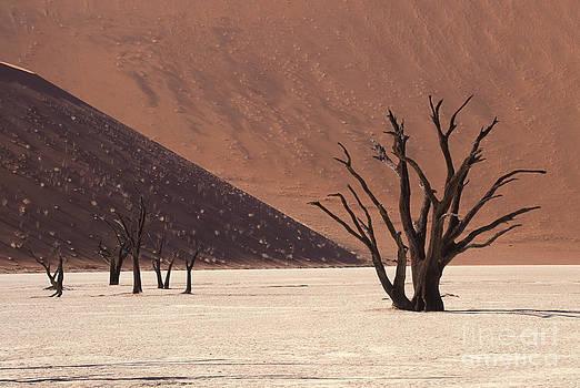 Dead Vlei Namibia Africa by Rosemary Calvert