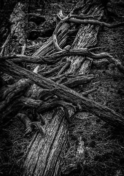Ray Van Gundy - Dead Wood