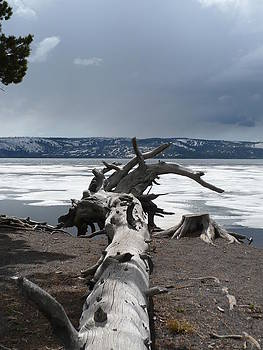 Jeffrey Randolph - Dead Wood