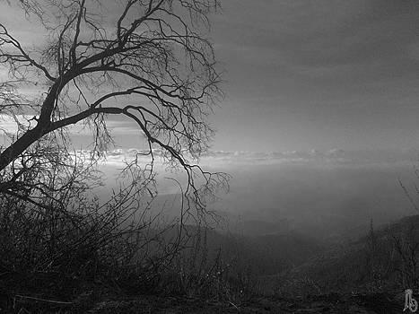 Dead Wood by Reed Orman