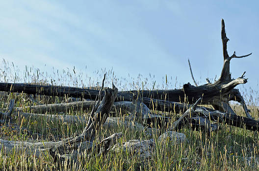 Deadfall and Grasses and Brushed Blue Skies by Bruce Gourley