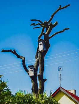 Algirdas Lukas - Deadly ill Tree still waiting